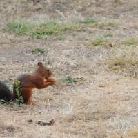 un écureuil gourmand
