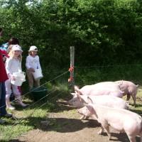 La ferme pédagogique du CPIE à Lathus-Saint-Rémy